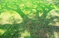 Skuggan av trädet på en grön gräsmatta. Arkivbild