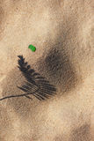 Skuggan av växten på den gula sandstranden Arkivfoton