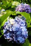 Skuggar av blått Royaltyfri Foto