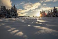 Skuggar av en Snowdrake Royaltyfri Fotografi