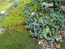 Skuggar av gräsplan Royaltyfria Bilder