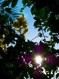 Skuggat blommor och träd mot solen Arkivbilder