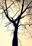 Skuggaträd Royaltyfri Fotografi