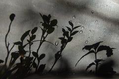 Skuggaväxter på tyget Arkivbilder