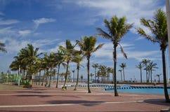 Skuggig palmträdställning på beachfront Durbans. Royaltyfria Bilder