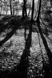 skuggig skog fotografering för bildbyråer