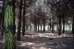 Skuggig skog på en solig dag Arkivfoto