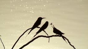 Skuggor av fåglar Arkivbild