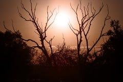Skuggor av filialer under fältet solen Arkivfoto