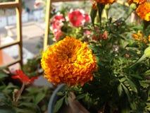 Skuggor av flora Royaltyfri Fotografi