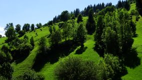 50 skuggor av gräsplan i sommaren Royaltyfri Foto