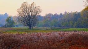 Skuggor av hösten Arkivfoton