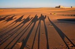 Skuggor av kamelhusvagnar i öknen Royaltyfri Bild