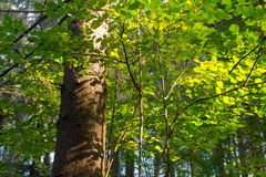 Skuggor av sidor Skog Royaltyfri Foto