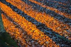 Skuggor av stammar på röda och orange blad på undervegetationen på Royaltyfri Bild
