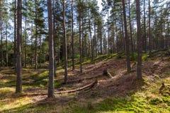 Skuggor av träd i skog Fotografering för Bildbyråer