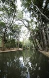 Skuggor av träd i vatten royaltyfri foto