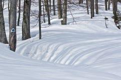 Skuggor av träden i vinter Arkivbilder