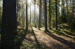 Skuggor i skog Royaltyfria Bilder
