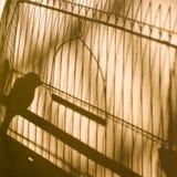 skuggor Kanariefågelfågel i buren Royaltyfri Foto