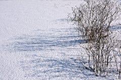 Skuggor på snön Arkivfoto