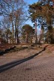 Skuggor på trappan som omges av nästan nakna träd - lodlinje royaltyfria foton