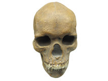 Skul. The image of skull under the white background. Focus is under the front part of skull Royalty Free Stock Image