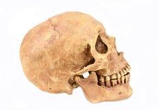 Skul humano Foto de archivo libre de regalías