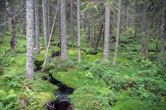 Skuleskogen国家公园 库存照片
