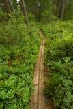 Skuleskogen national park. Trekking parh trough rich forest in skuleskogen national park north in sweden Stock Photos