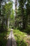 Skuleskogen National Park, Hoega Kusten, Sweden Stock Image