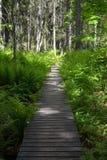 Skuleskogen National Park, Hoega Kusten, Sweden Stock Images
