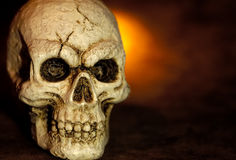 Skull. Photo of a Skull Royalty Free Stock Images