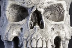 Skull. Royalty Free Stock Images