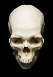 Skull. White real Skull with black background royalty free stock image