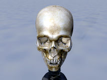 Skull 14. This is an computer generated image of a skull Stock Image