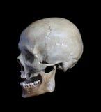 Skull. Royalty Free Stock Photography