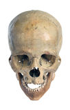 Skull. Royalty Free Stock Image