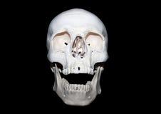 Skull Stock Image
