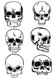 Skull. The image of skull of various kinds Royalty Free Illustration