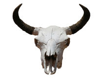 Free Skull Stock Photography - 189862