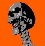 Skull 20 Royalty Free Stock Image