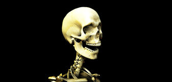 Skull 20 Stock Photo