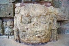 Free Skull Stock Photos - 20093413
