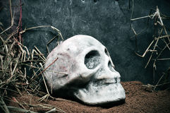 Skull. A skull out of a grave on a scary scene for Halloween Royalty Free Stock Images