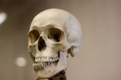Skull Royalty Free Stock Photography
