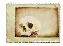 The skull. White human skull - the old vintage background. Suitable as a text field Stock Image
