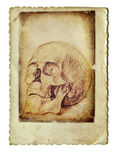 The skull. Hand-charcoal drawing of human skull - the old vintage background Stock Photos