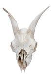 Skull. Death bone head goat skull Stock Images