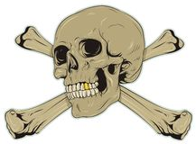 Skull. Grey skull with bones and gold tooth Stock Photo